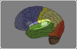 Van der Landen Hoortechniek - het gehoor hersenen